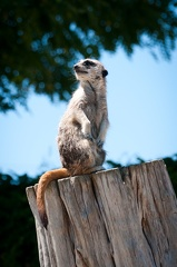 120723 Beauval  636